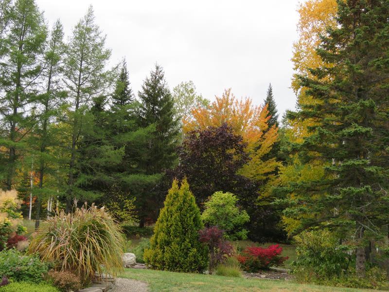 C'est l'automne chez Tulipe 127 Img_2224