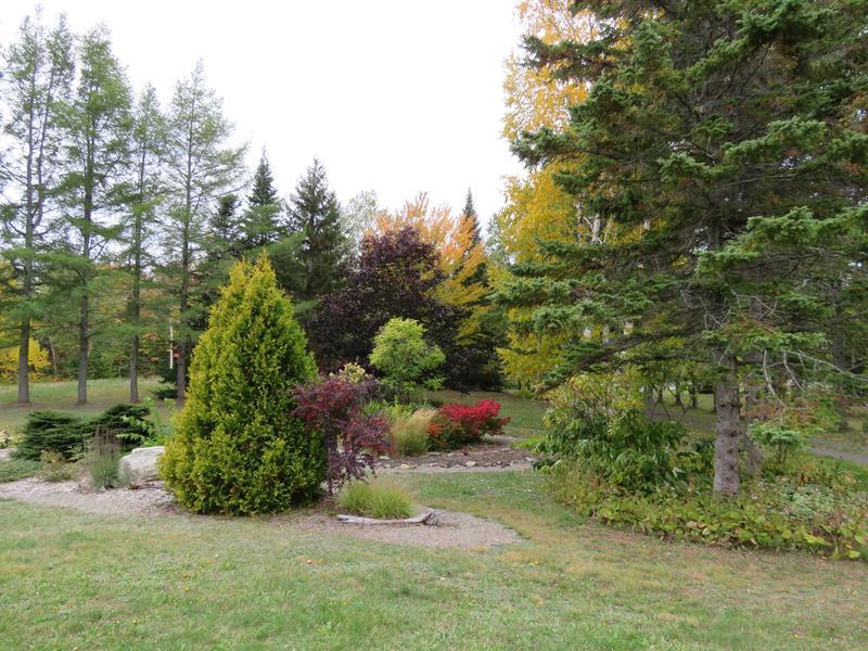 C'est l'automne chez Tulipe 127 Img_2225