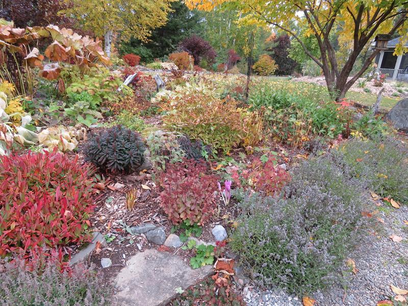 C'est l'automne chez Tulipe 127 Img_2322