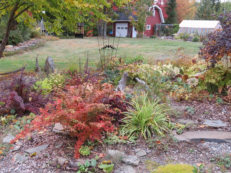 C'est l'automne chez Tulipe 127 Img_2323