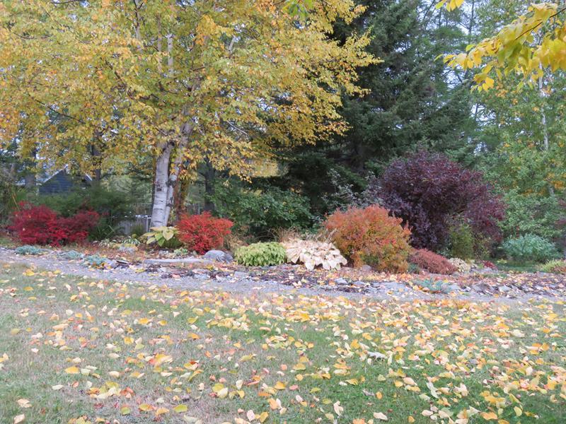 C'est l'automne chez Tulipe 127 Img_2324