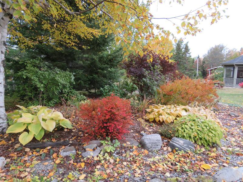 C'est l'automne chez Tulipe 127 Img_2325