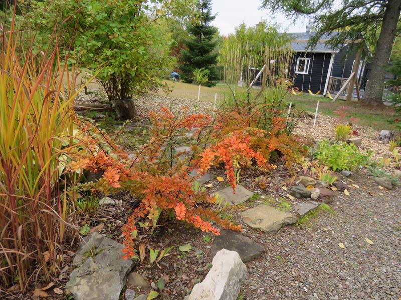 C'est l'automne chez Tulipe 127 - Page 3 Img_2326