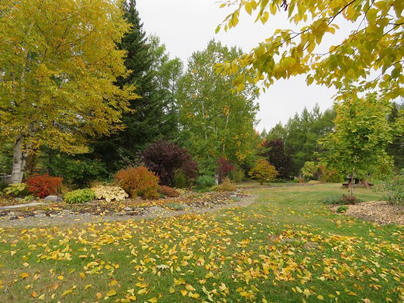 C'est l'automne chez Tulipe 127 Img_2327