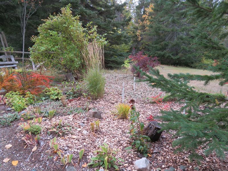 C'est l'automne chez Tulipe 127 Img_2328