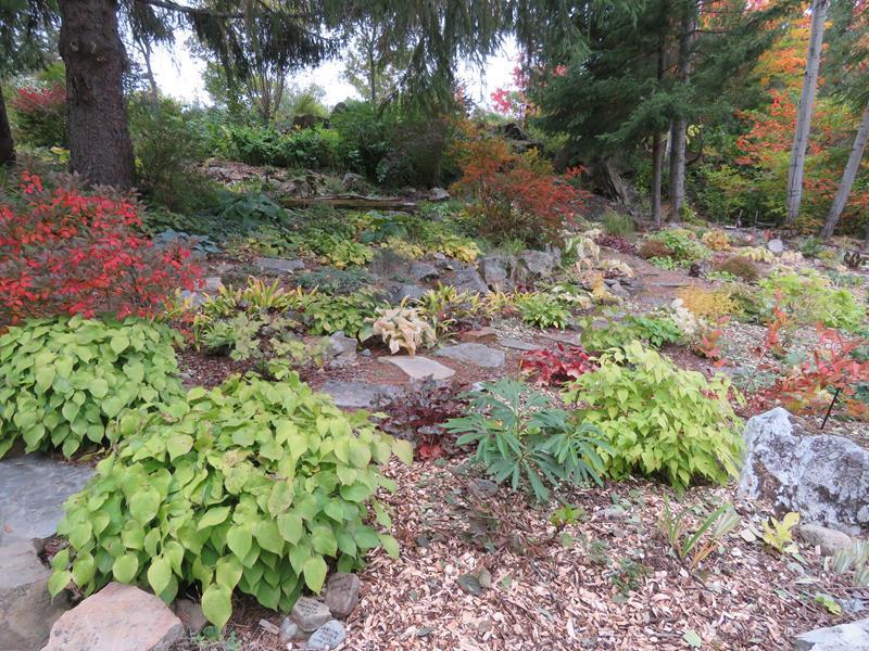 C'est l'automne chez Tulipe 127 Img_2331