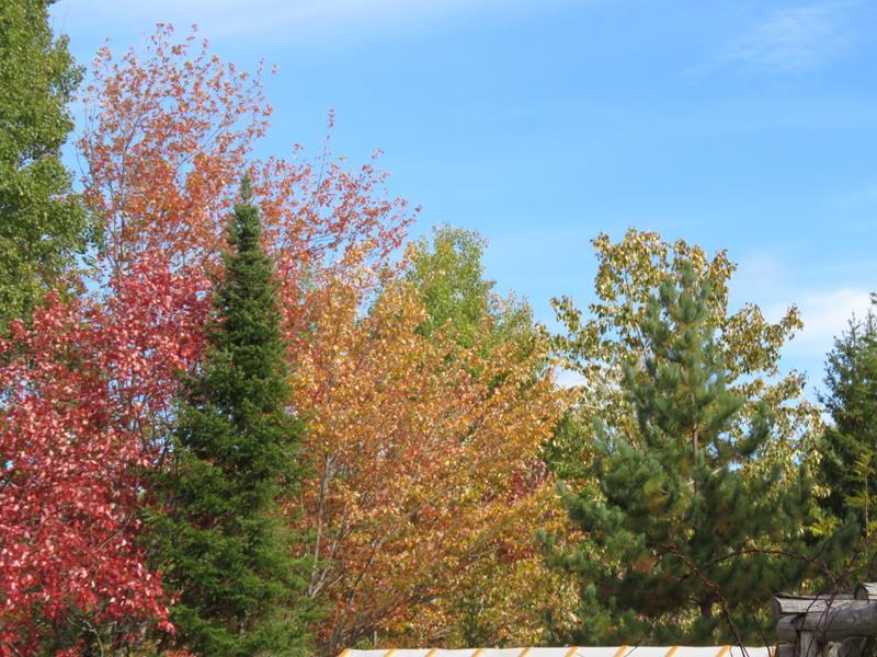 C'est l'automne chez Tulipe 127 Img_2420