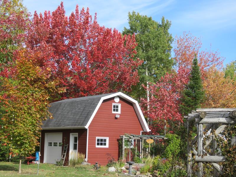 C'est l'automne chez Tulipe 127 Img_2422