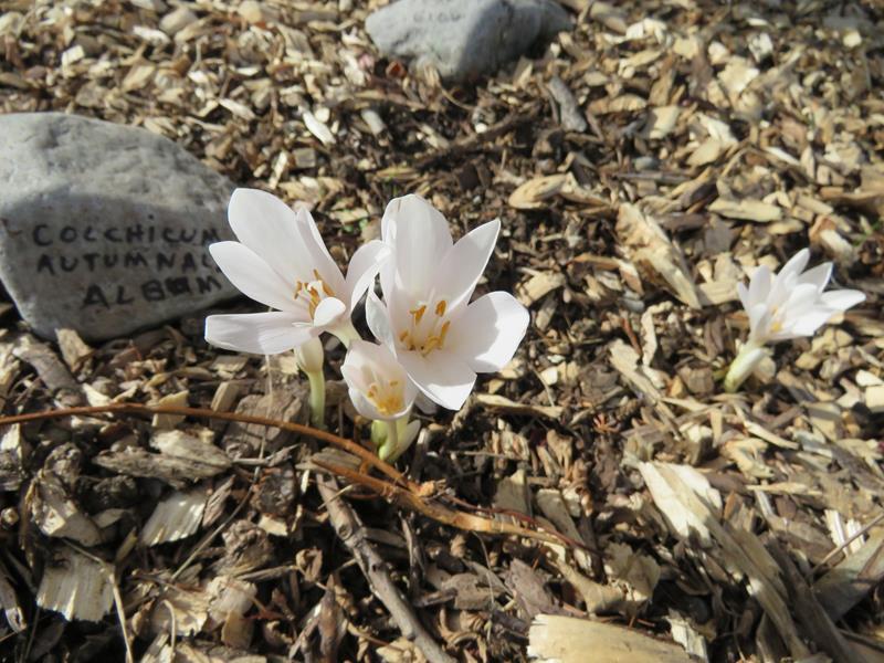 C'est l'automne chez Tulipe 127 Img_2426