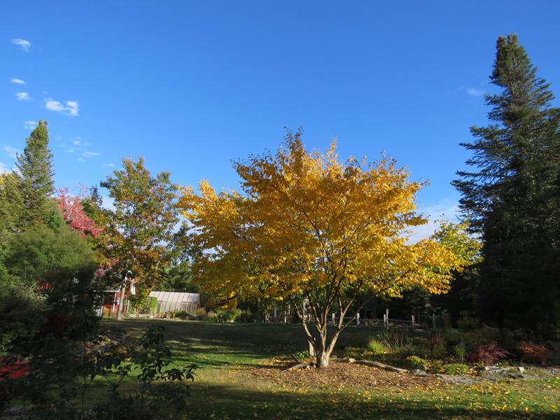 C'est l'automne chez Tulipe 127 Img_2510