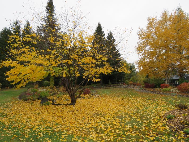 C'est l'automne chez Tulipe 127 - Page 3 Img_2712