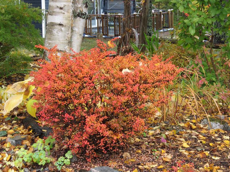 C'est l'automne chez Tulipe 127 - Page 3 Img_2713