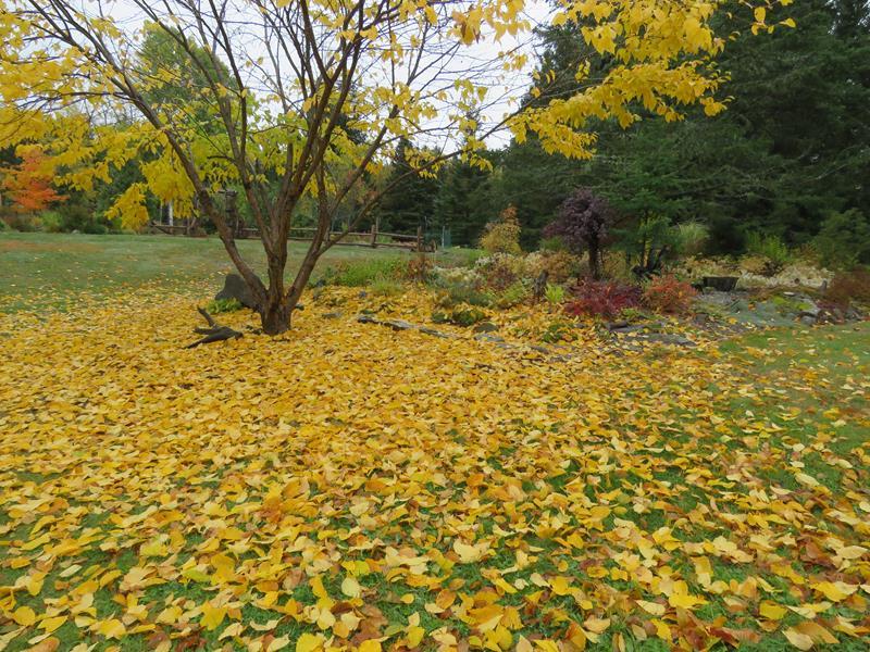 C'est l'automne chez Tulipe 127 - Page 3 Img_2715