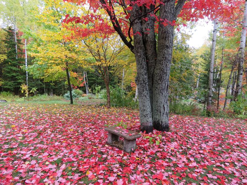 C'est l'automne chez Tulipe 127 - Page 3 Img_2716