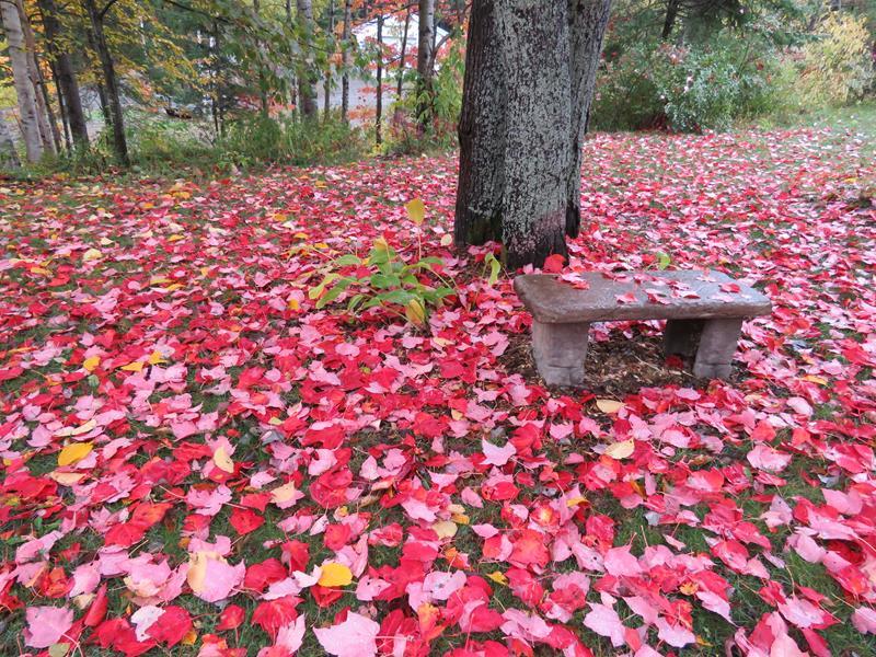 C'est l'automne chez Tulipe 127 - Page 3 Img_2717
