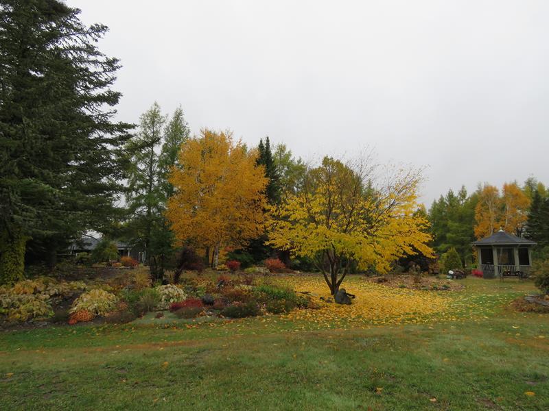 C'est l'automne chez Tulipe 127 - Page 3 Img_2811