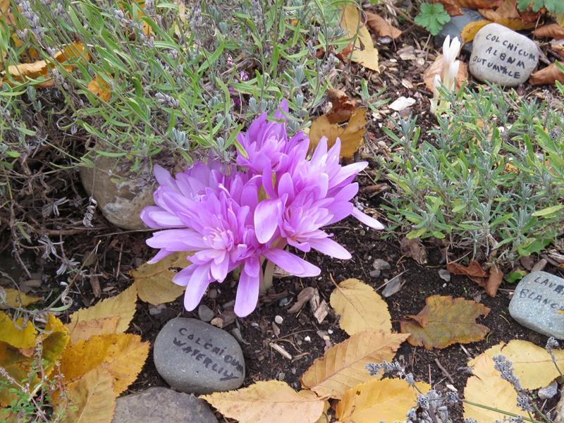 C'est l'automne chez Tulipe 127 - Page 4 Img_3019