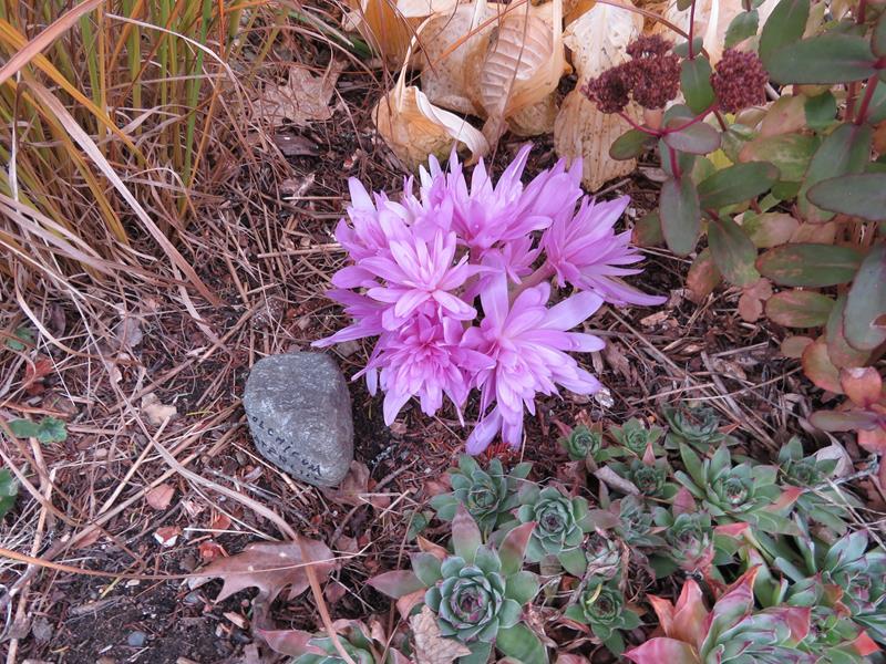 C'est l'automne chez Tulipe 127 - Page 4 Img_3117