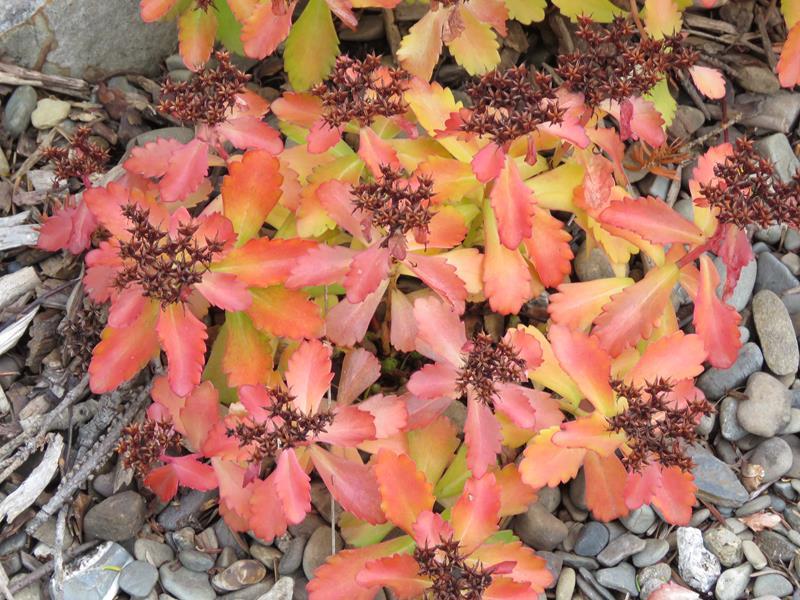C'est l'automne chez Tulipe 127 - Page 4 Img_3118