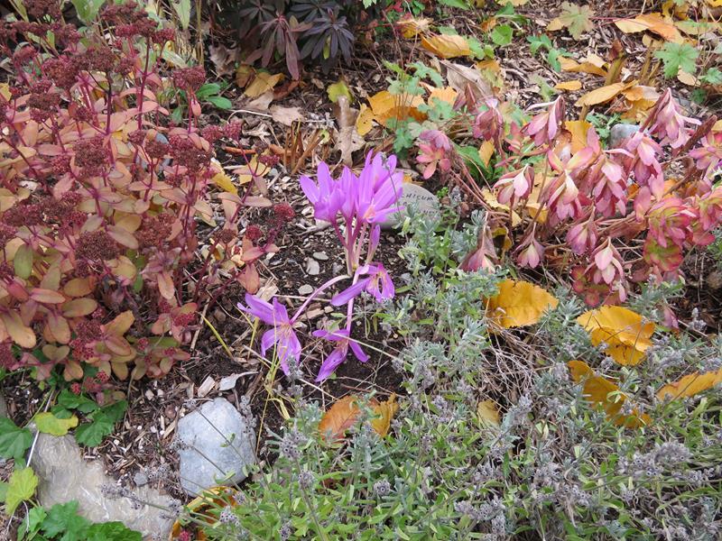 C'est l'automne chez Tulipe 127 - Page 4 Img_3119