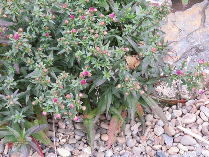 C'est l'automne chez Tulipe 127 - Page 4 Img_3121