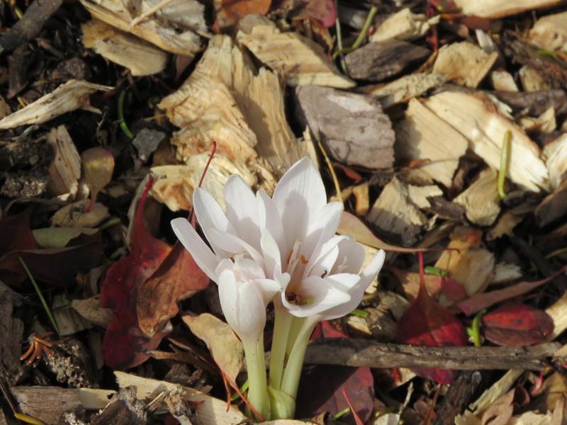 C'est l'automne chez Tulipe 127 - Page 4 Img_3123
