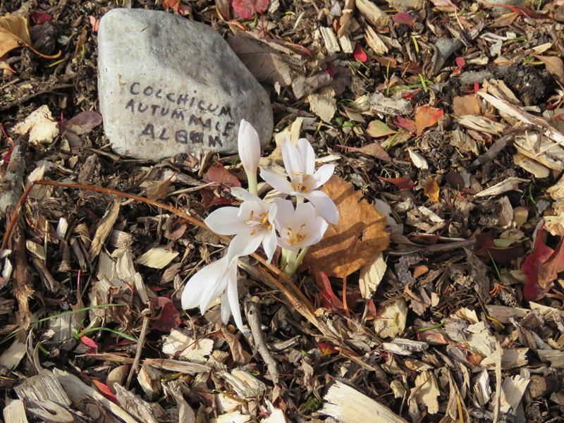 C'est l'automne chez Tulipe 127 - Page 4 Img_3124