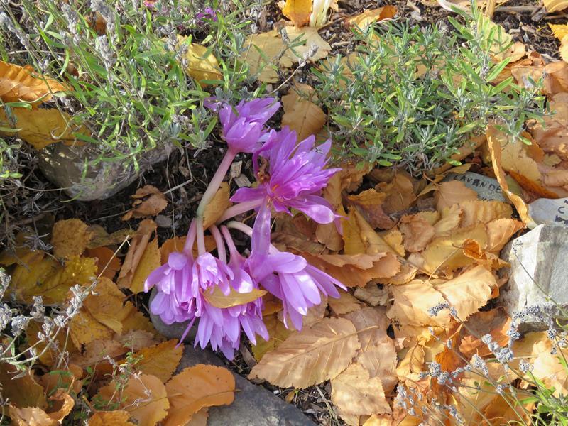 C'est l'automne chez Tulipe 127 - Page 4 Img_3126