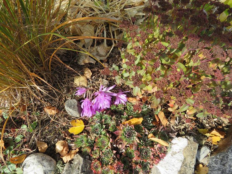 C'est l'automne chez Tulipe 127 - Page 4 Img_3127