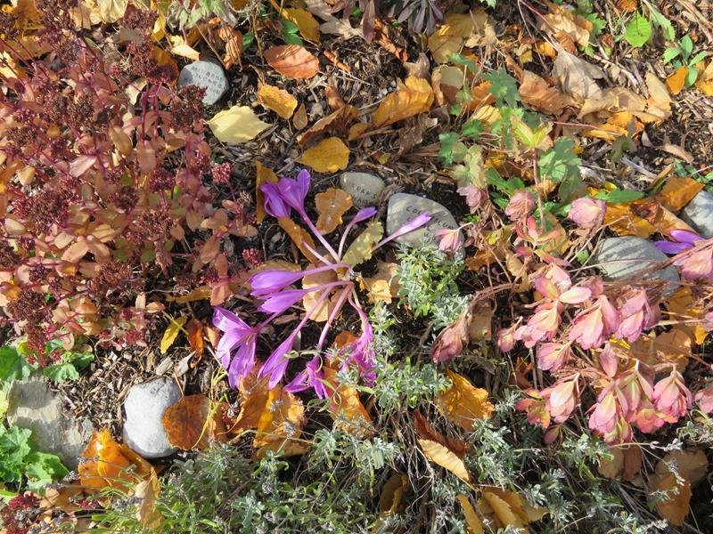 C'est l'automne chez Tulipe 127 - Page 4 Img_3128