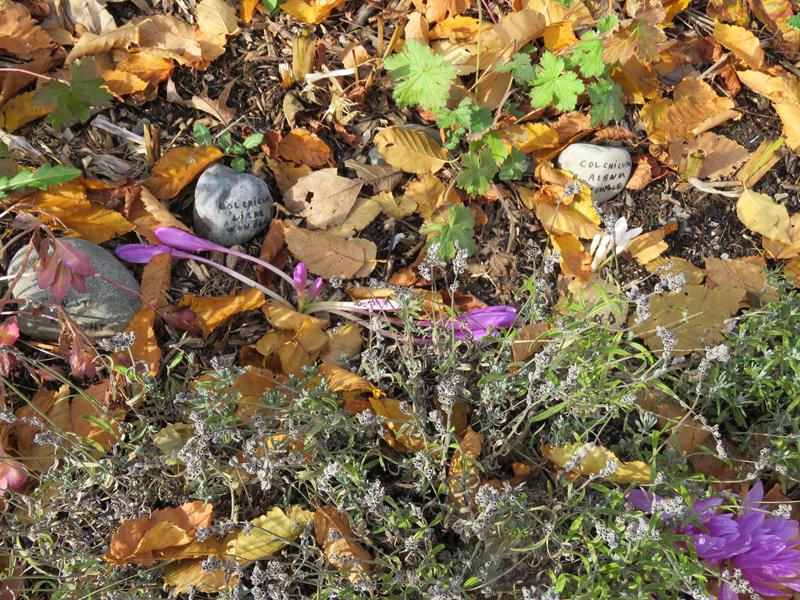 C'est l'automne chez Tulipe 127 - Page 4 Img_3129