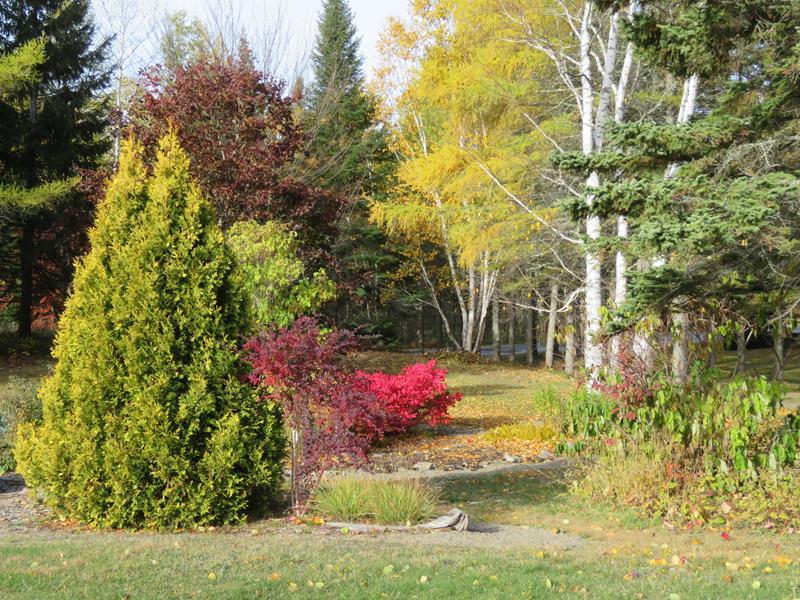 C'est l'automne chez Tulipe 127 - Page 4 Img_3130