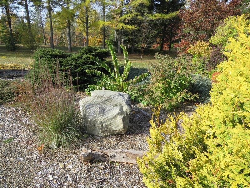 C'est l'automne chez Tulipe 127 - Page 4 Img_3134
