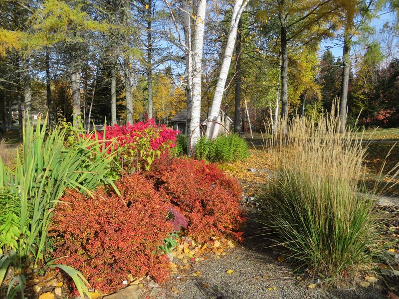 C'est l'automne chez Tulipe 127 - Page 4 Img_3136
