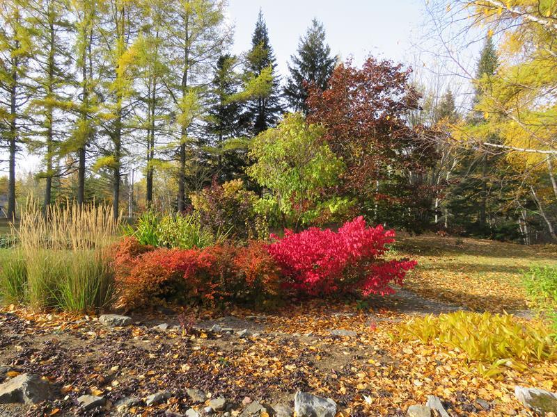 C'est l'automne chez Tulipe 127 - Page 4 Img_3137