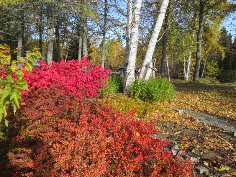 C'est l'automne chez Tulipe 127 - Page 4 Img_3138