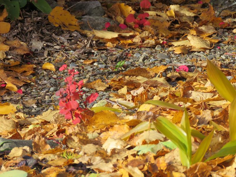 C'est l'automne chez Tulipe 127 - Page 4 Img_3139
