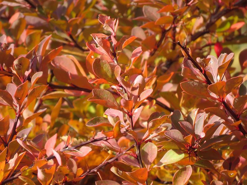C'est l'automne chez Tulipe 127 - Page 4 Img_3140