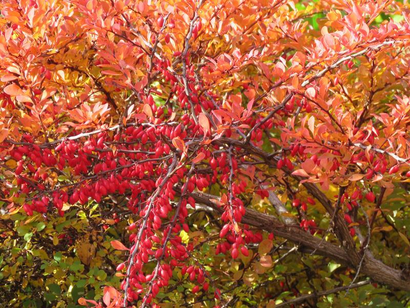 C'est l'automne chez Tulipe 127 - Page 4 Img_3141