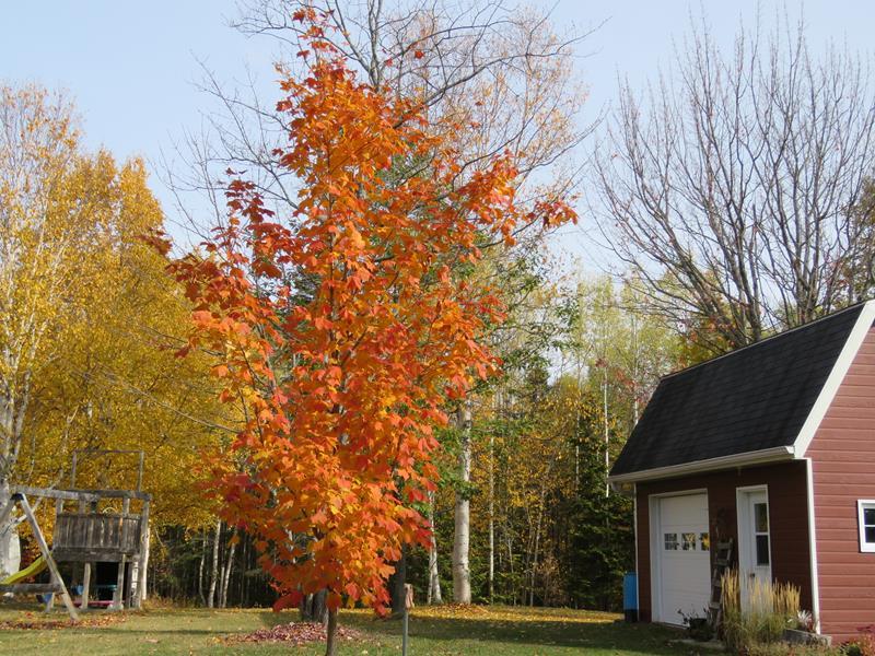 C'est l'automne chez Tulipe 127 - Page 5 Img_3217