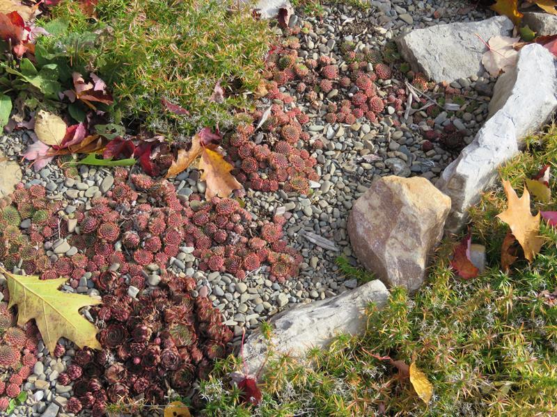 C'est l'automne chez Tulipe 127 - Page 5 Img_3218