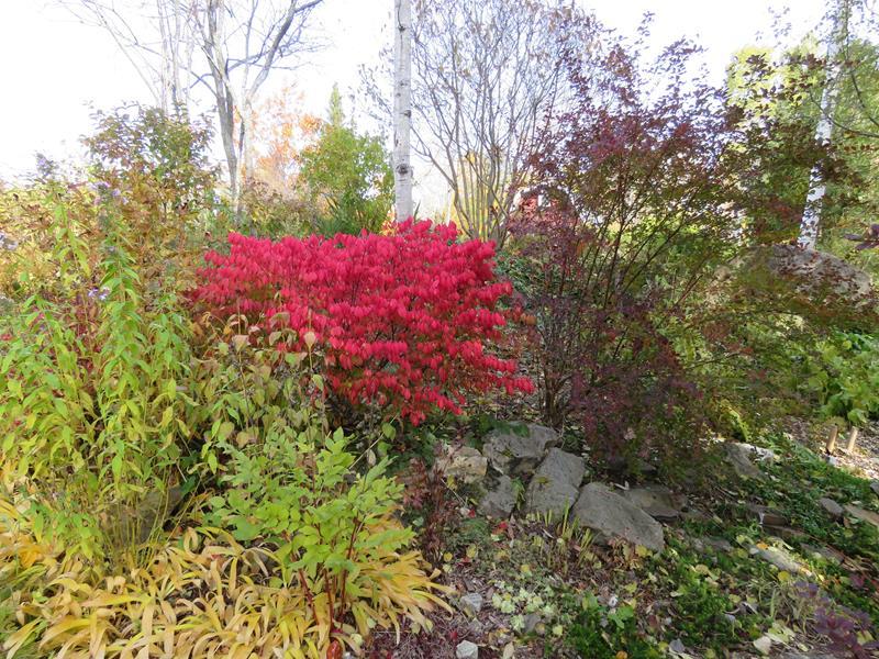 C'est l'automne chez Tulipe 127 - Page 5 Img_3219