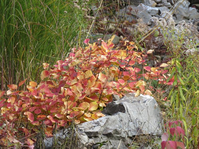 C'est l'automne chez Tulipe 127 - Page 5 Img_3220