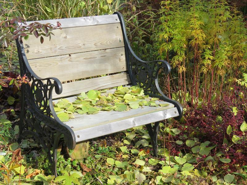 C'est l'automne chez Tulipe 127 - Page 5 Img_3223