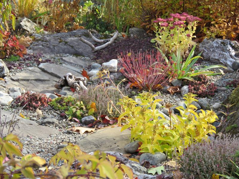 C'est l'automne chez Tulipe 127 - Page 5 Img_3225