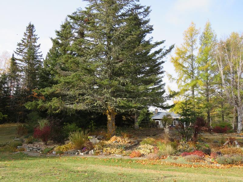C'est l'automne chez Tulipe 127 - Page 5 Img_3231