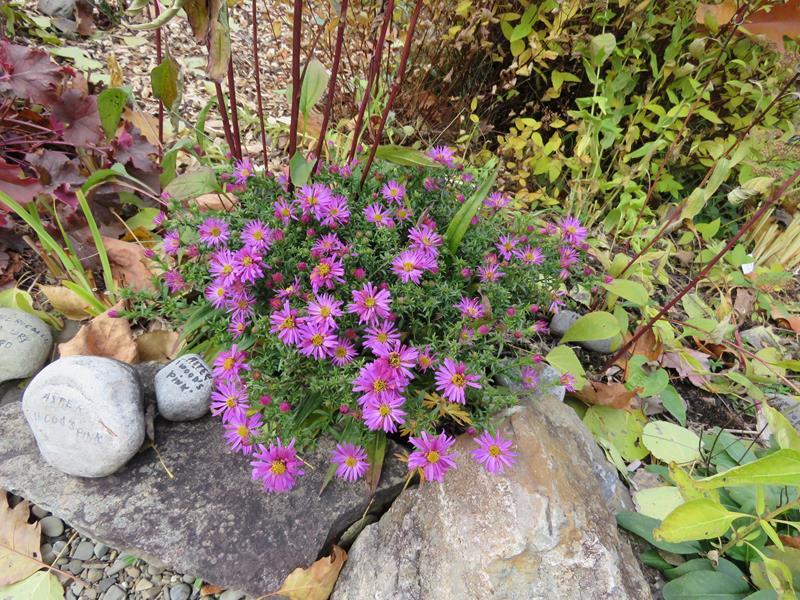 C'est l'automne chez Tulipe 127 - Page 5 Img_3319
