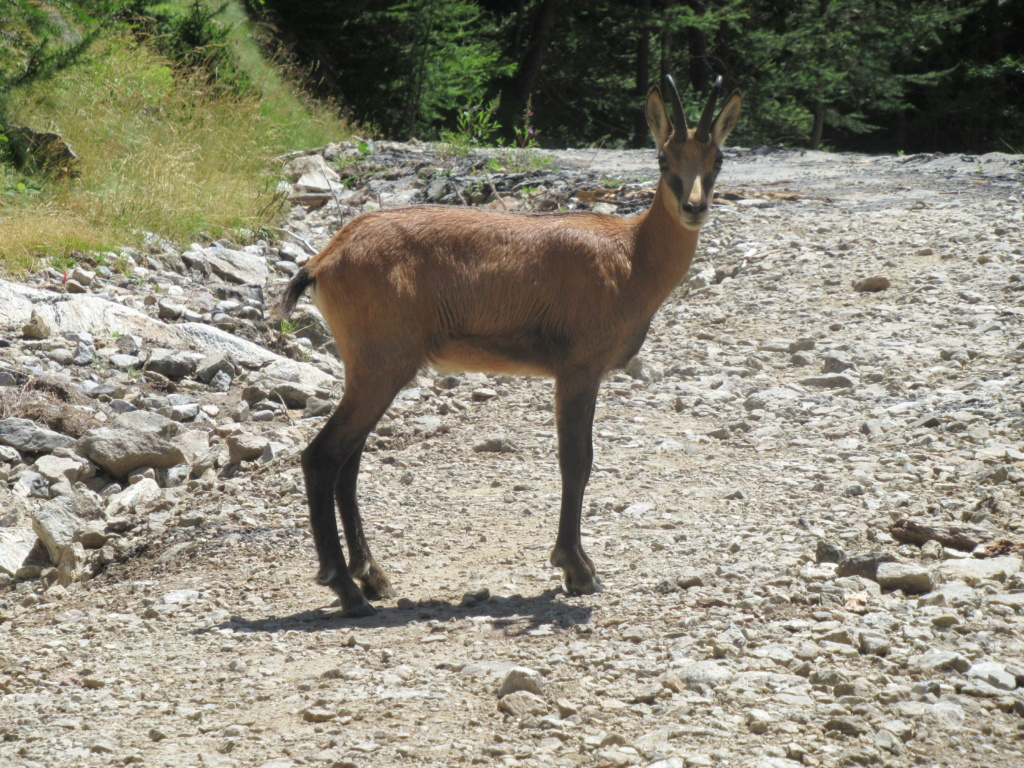nouveauté au Grand Cayre Img_5112