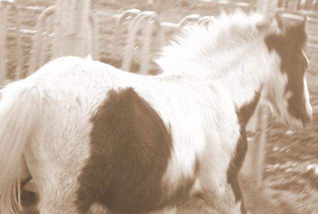 Elevage Eole, un petit élevage Breton qui monte, qui monte, - Page 2 Thor210