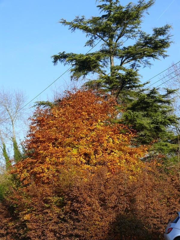 19 - Champignons et couleurs d'automne !!! Automn13